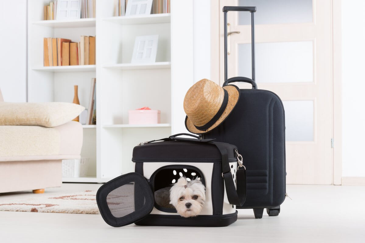 Small maltese terrier in a black dog carrier in the living room