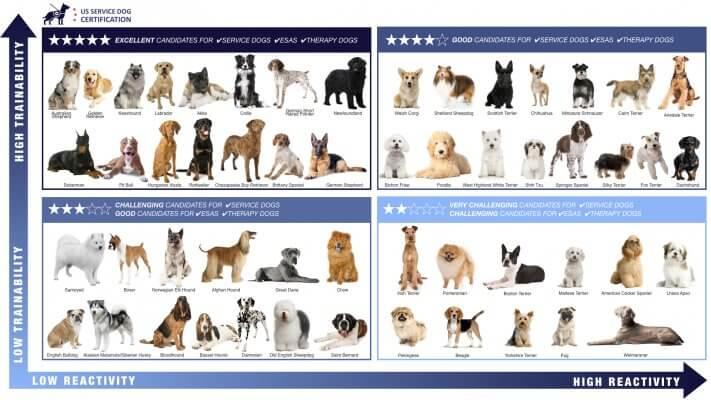 Infographic of service dog trainability levels