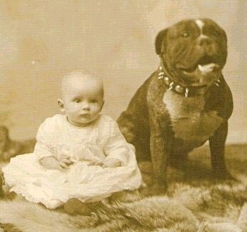 1940s picture of baby girl sitting with large pit bull