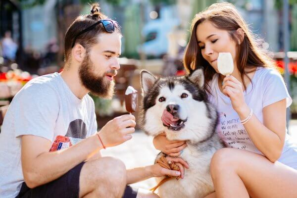 Husky eating ice cream