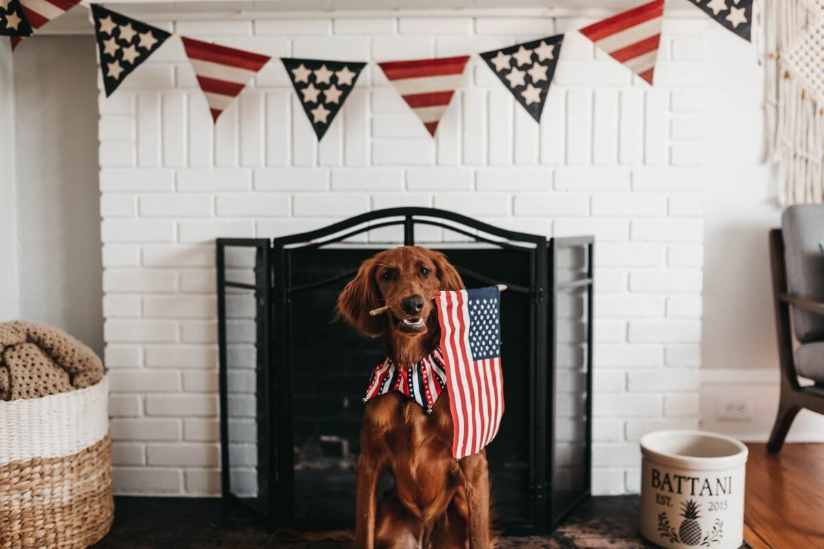 Dog holding american flag