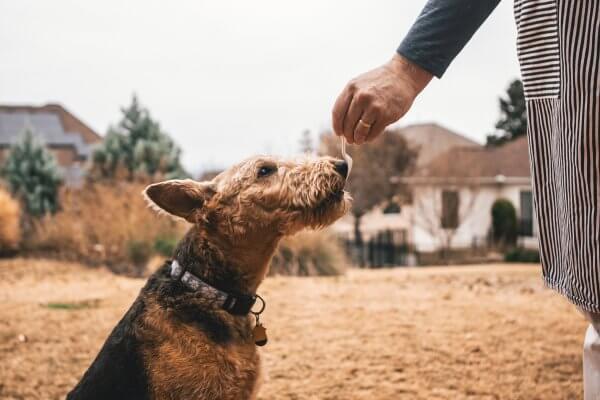 Dog getting treat positive reinforcement