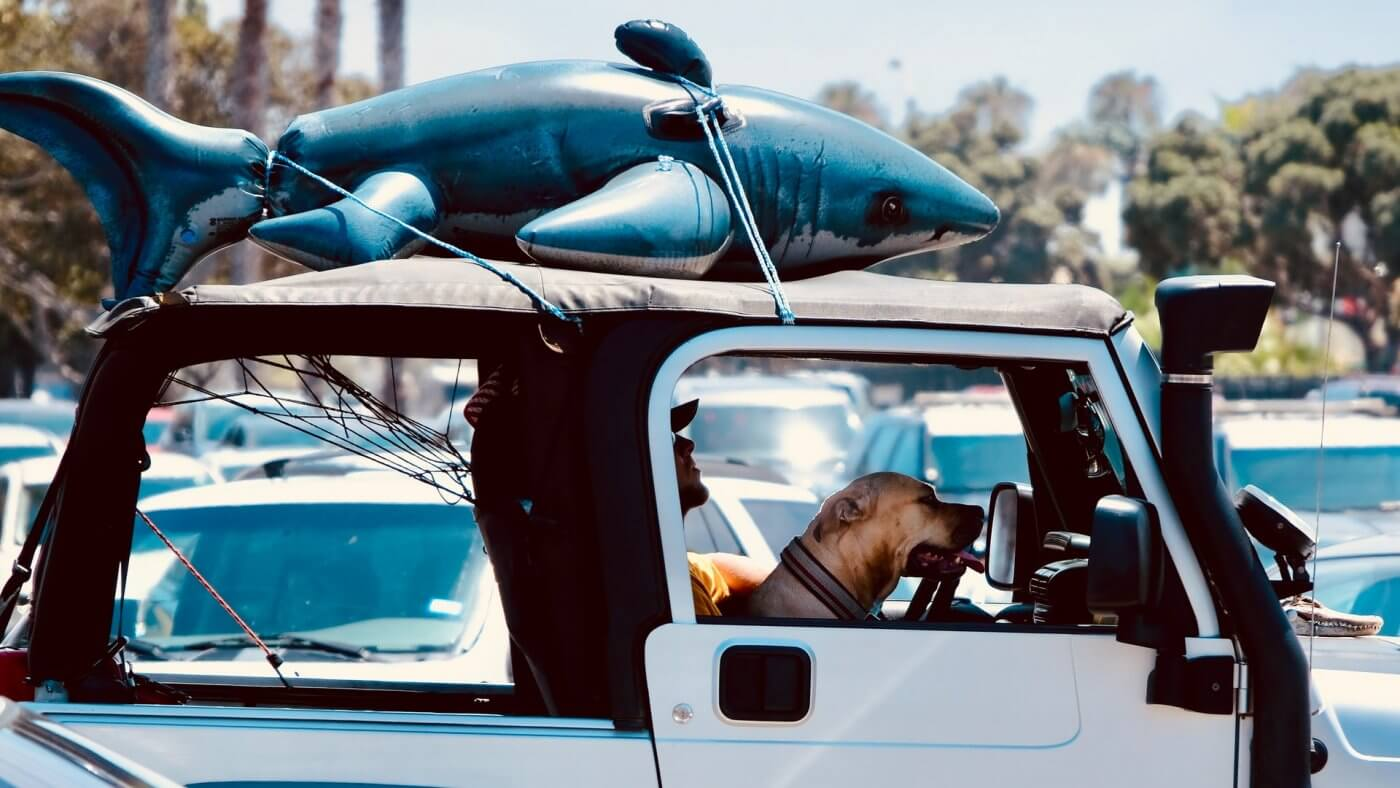 Dog on road trip in Jeep: Photo by philip hawkshaw