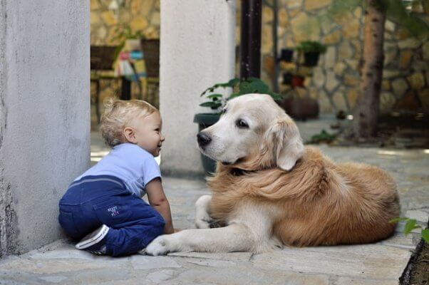 Dog sits calmly with toddler