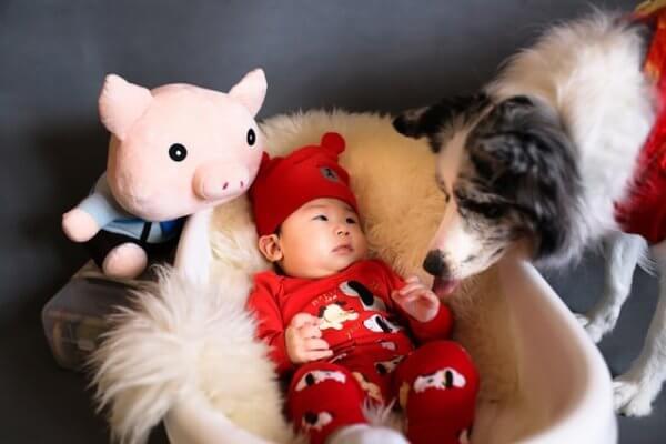 Dog sniffs baby in bassinet