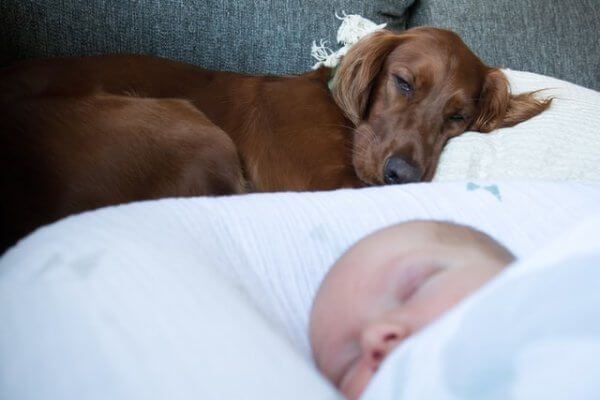 Baby and Dog in bed
