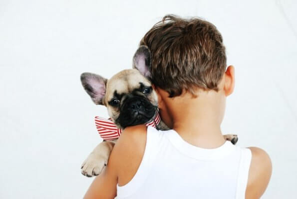 boy holds puppy bulldog with bow on collar