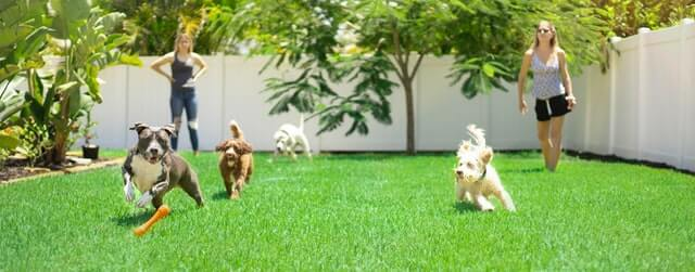 4 dogs play in a backyard, watched by two women